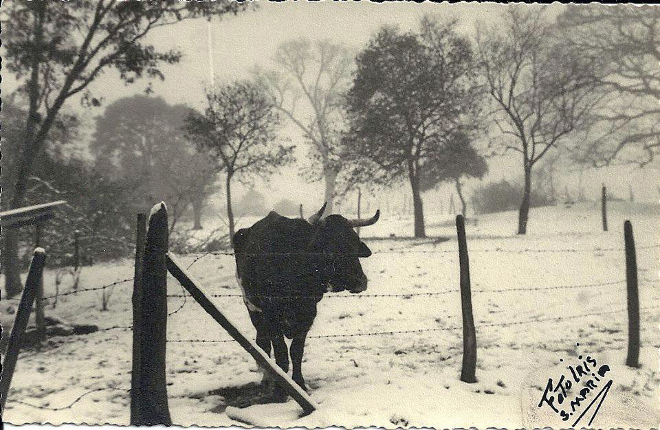 Santa Maria - Neve em Itaara em 1965.