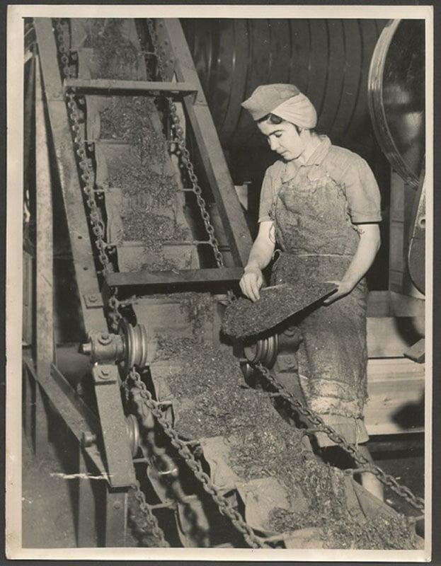 Santa Cruz do Sul - Cia Brasileira de Fumo em Folha no Interior da fábrica ,área de produção. Fonte: foto Theodor Preising. déc1950
