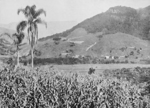 Agricultura na região colonial déc1920