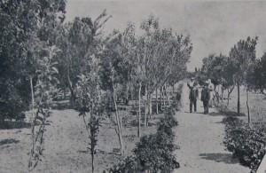 Apicultura déc1920 1