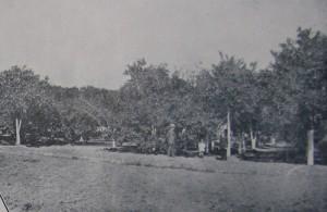 Apicultura déc1920 2
