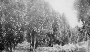Apicultura déc1920 6