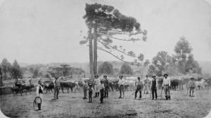 Campos e Pastagens déc1920 1
