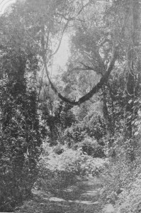 Selva Virgem déc1920 1