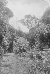 Selva Virgem déc1920 2