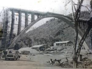 Ipê Ponte dos Arcos Tronco Principal Sul(acervo Renan Zanella)