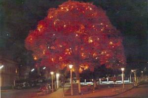 Nova Prata Noturna Árvore de Natal 1971