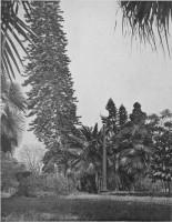 Porto Alegre Araucárias e Palmeiras em um dos parques públicos