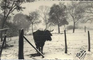 Santa Maria Neve Itaara 1965