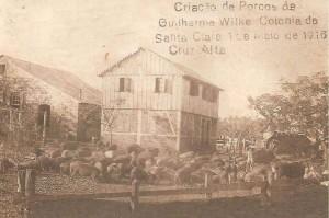 Cruz Alta Criação de Porcos Colônia Santa Clara 1916.
