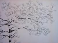 albero gen Prati3
